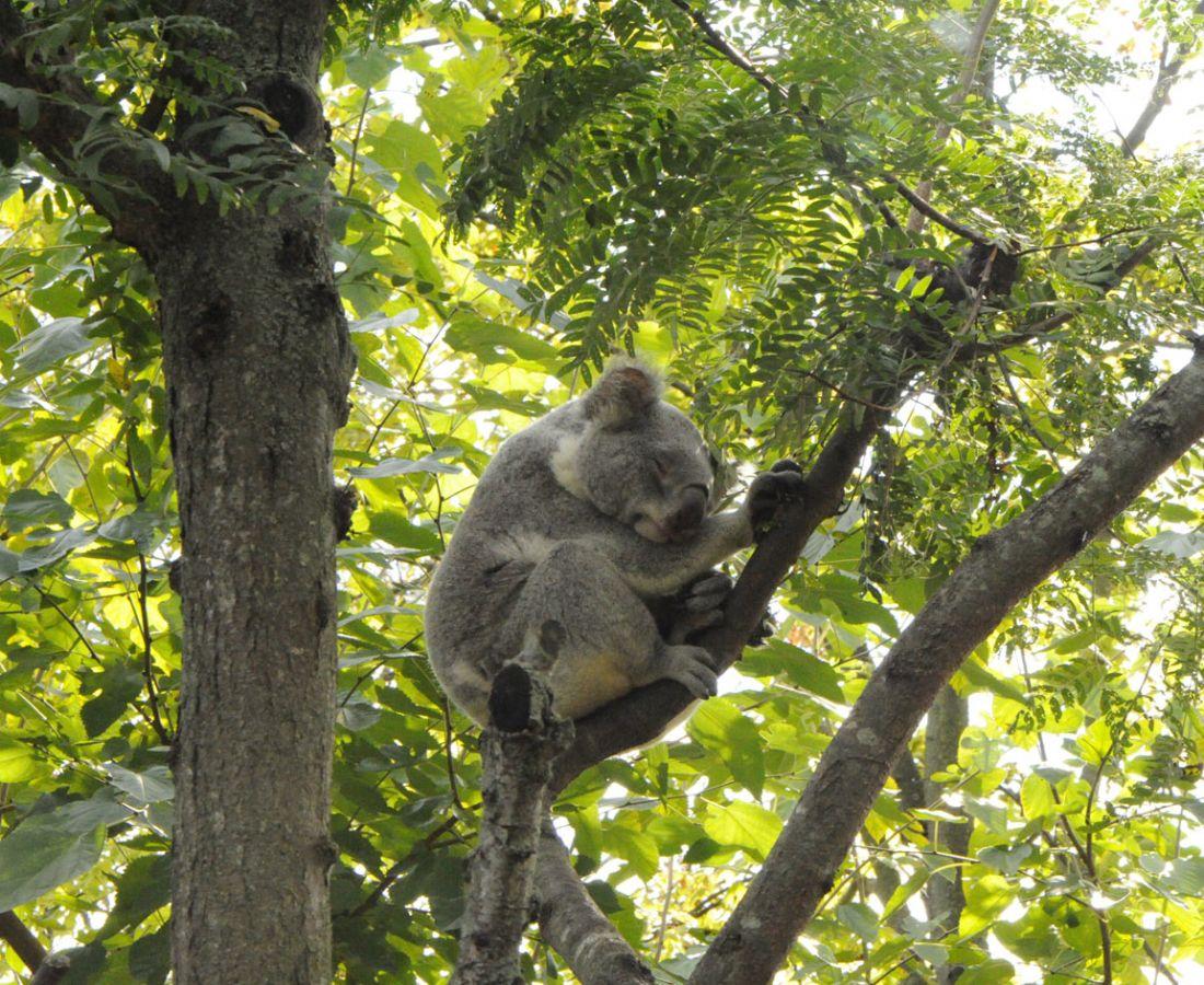 صور منوعة – ألبوم صور  : حديقة الحيوانات النائمة