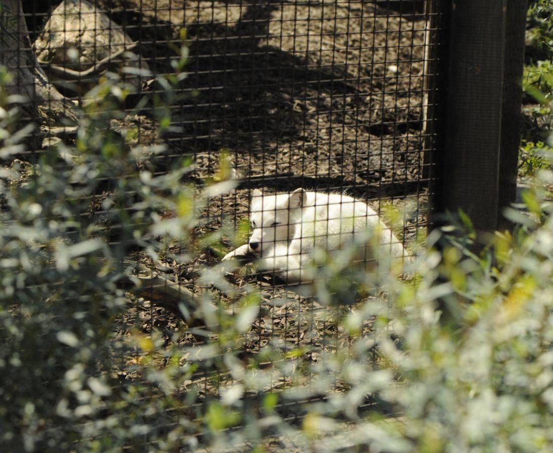 صور منوعة – ألبوم صور  : حديقة حيوانات كولومبوس 2