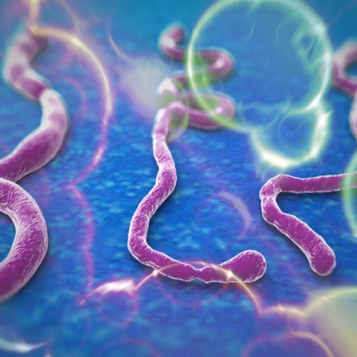 ما هو فيروس (إيبولا)؟