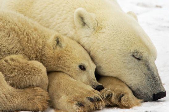قلّة النوم قد تزيد خطر السكتة الدماغية